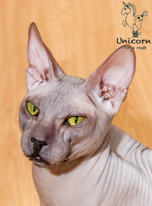 cats-67